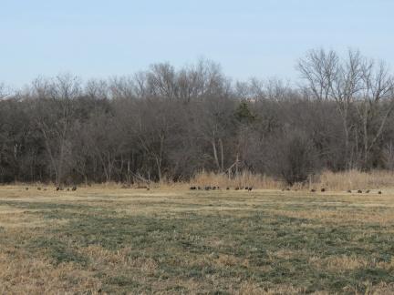 Wild Turkeys, photo by Elaine Stebler