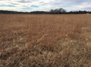 Some lovely patches of native tallgrass prairie there!