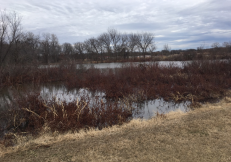 Really nice fringing wetlands along the lake.